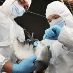 Bird flu China poultry Reuters