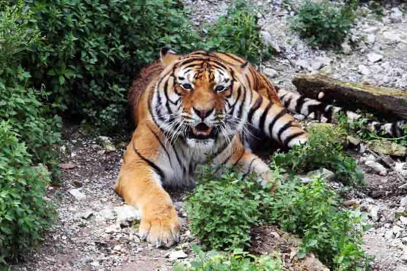 tigar zoo split pixsell