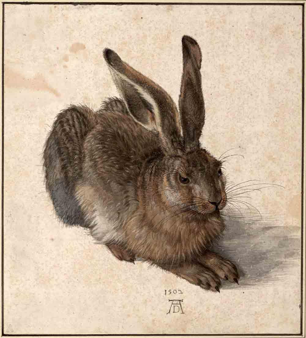 Albrecht Durer Poljski zec 1502 c Albertina Becc