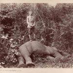Franjo Ferdinand s prvim slonom kojeg je ustrijelio KHM mit MVK und ÖTM