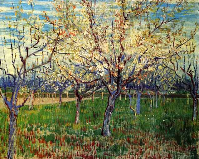 orchard-with-blossoming-apricot-trees