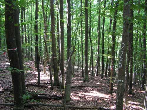 Predstavljanje Projekta ustupanja šume Pantovčak gradu Zagrebu