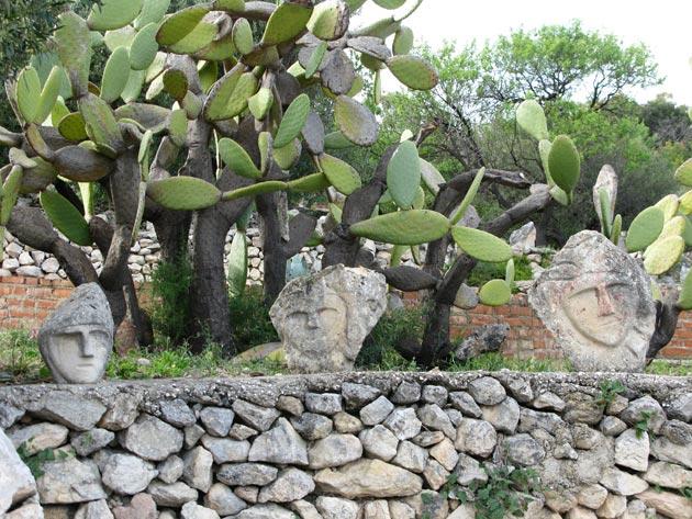 razum kaktus