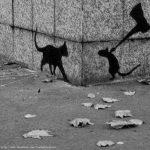 macke sjene