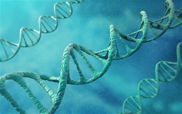 Više DNK uzimamo od očeva