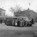 1955 črnomerec