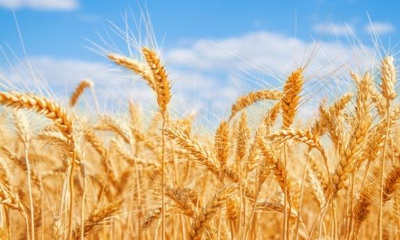 Hrvatska poljoprivreda i službeno najgora u Europskoj Uniji