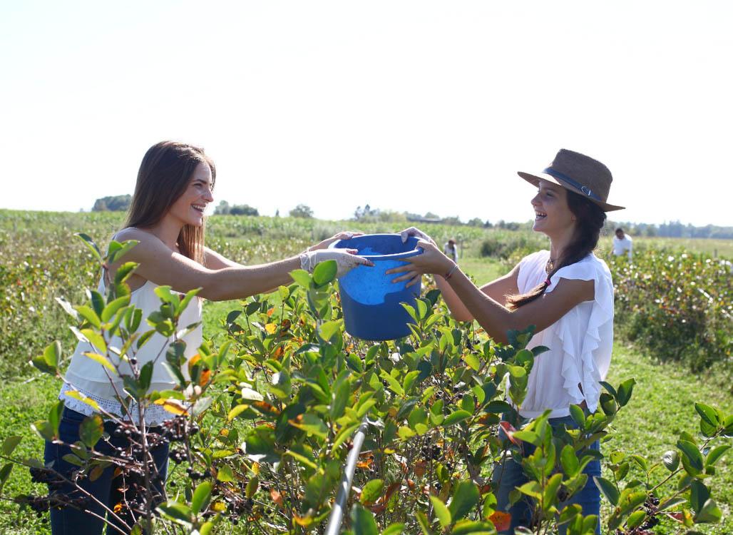 Tvrtka Aronia uživo najveći proizvođač ekološke aronije u Hrvatskoj