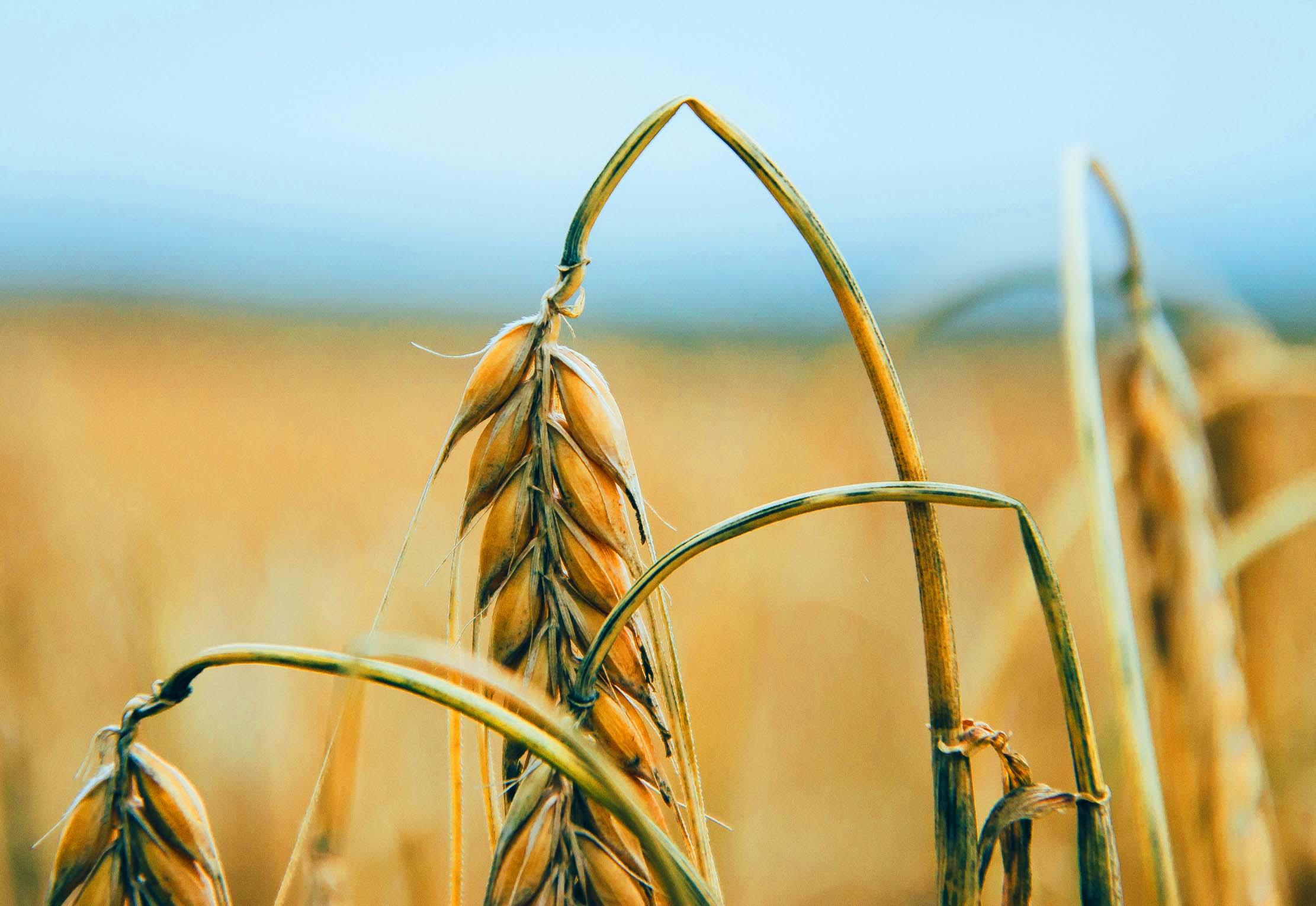 Što su rekli u Ministarstvu poljoprivrede o vrtoglavim bonusima članova uprave