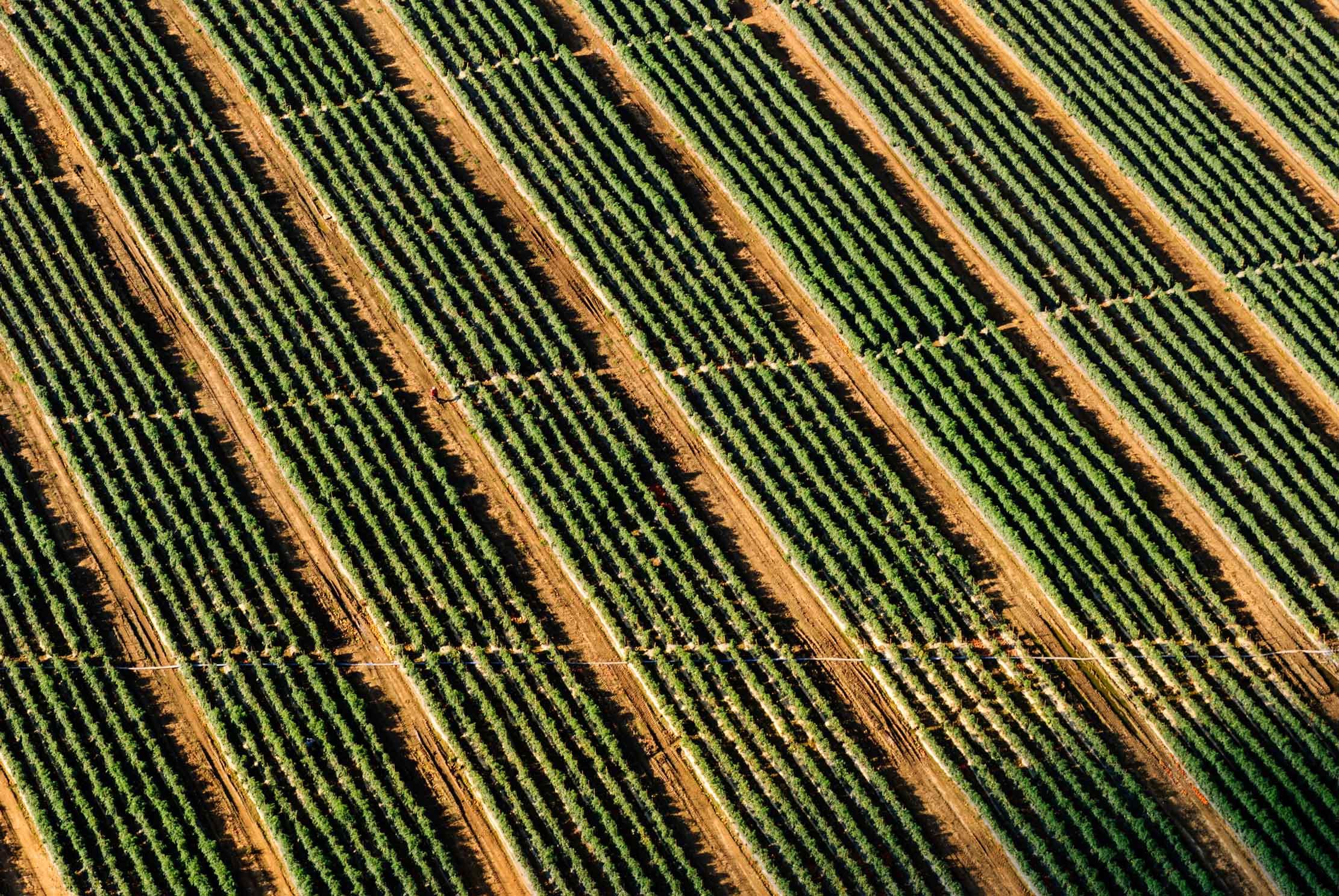 Obama potpisao zakon o strožem obilježavanju proizvoda koji sadrže GMO