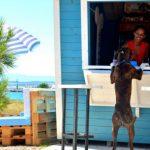 Monty s dog beach Crikvenica