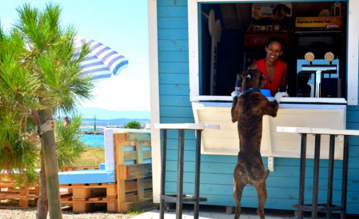 Kafić za pse: I psi piju pivo zar ne?