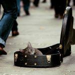 kitty 49101
