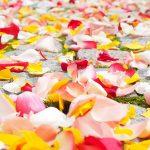rose petals 693570 960 720