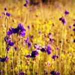 flower 155