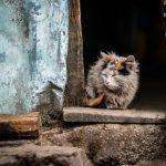 cat 1209