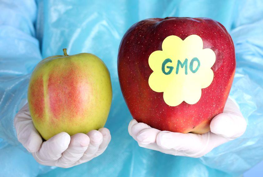 Molekularni biolozi s PMF-a odlučno za GMO