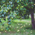 apple 791