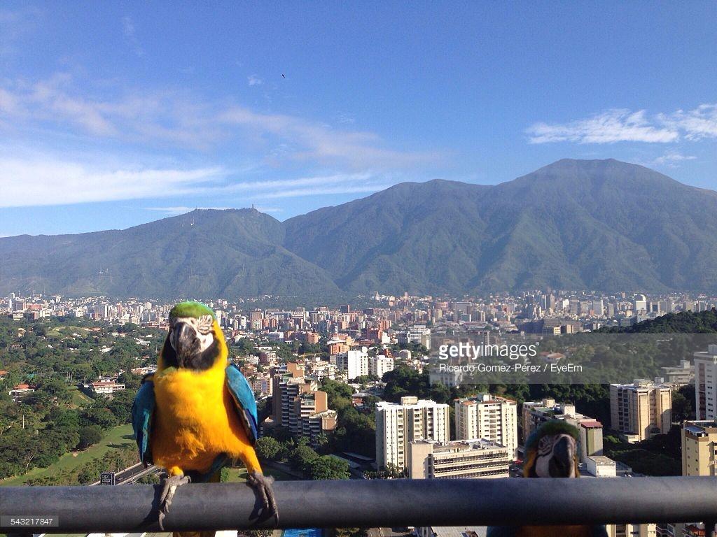 Kako je Caracas postao najopasniji grad na svijetu