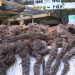 Ženske pletenice Huda jama Barbarin rov