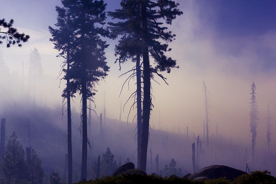 Svjetski dan šuma, 21. ožujka