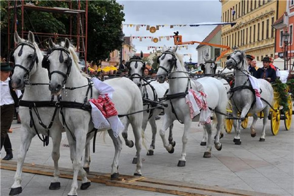 "Tradicijska priredba ""Konji bjelci"" u Babinoj Gredi"