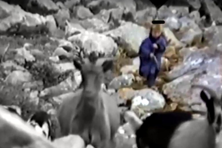 Maleni Luka Modrić štapom tjera koze po Velebitu