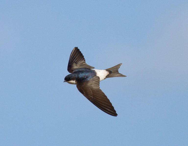 U Beču postavljeno 450 zamjenskih ptičjih gnijezda