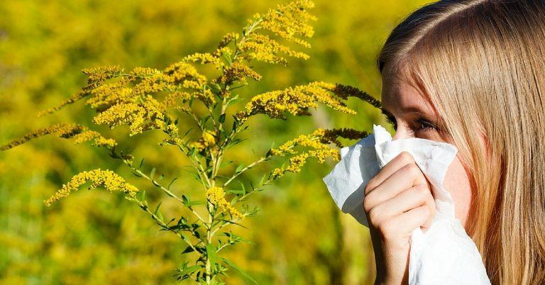 Alergijski rinitis i ambrozija – započinju kulminacije