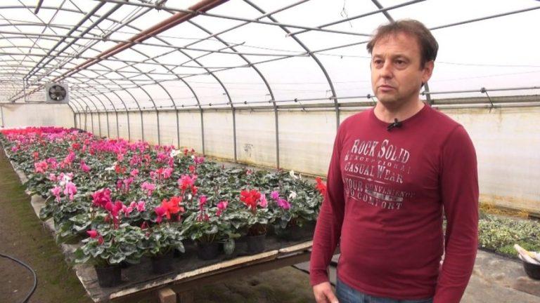 Bernard Savi, stručnjak u uzgoju ciklame