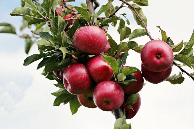 Može li se predozirati voćem? U Hrvatskoj sigurno ne!