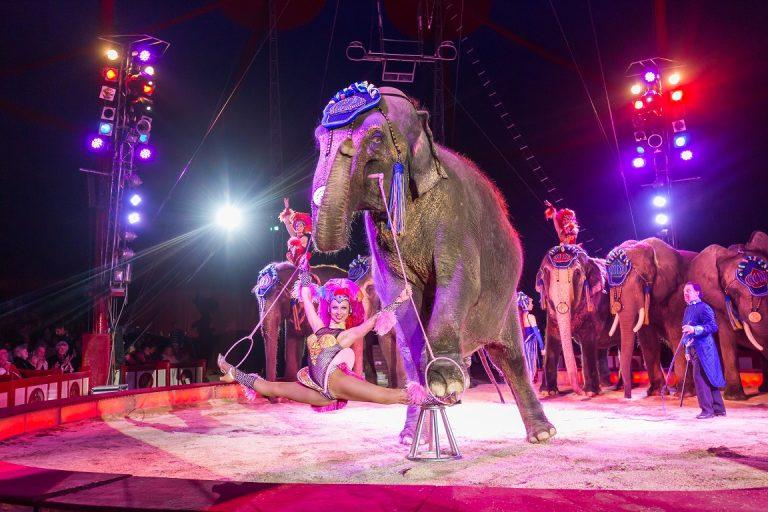 Sto godina Cirkusa Krone