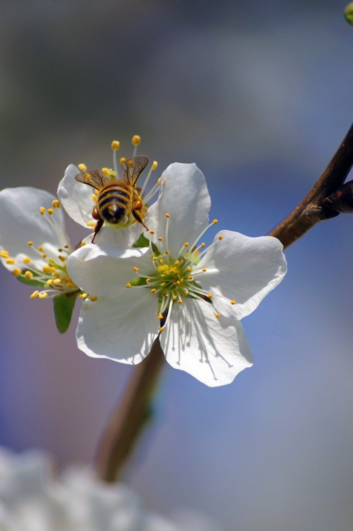 flower, bee, insects