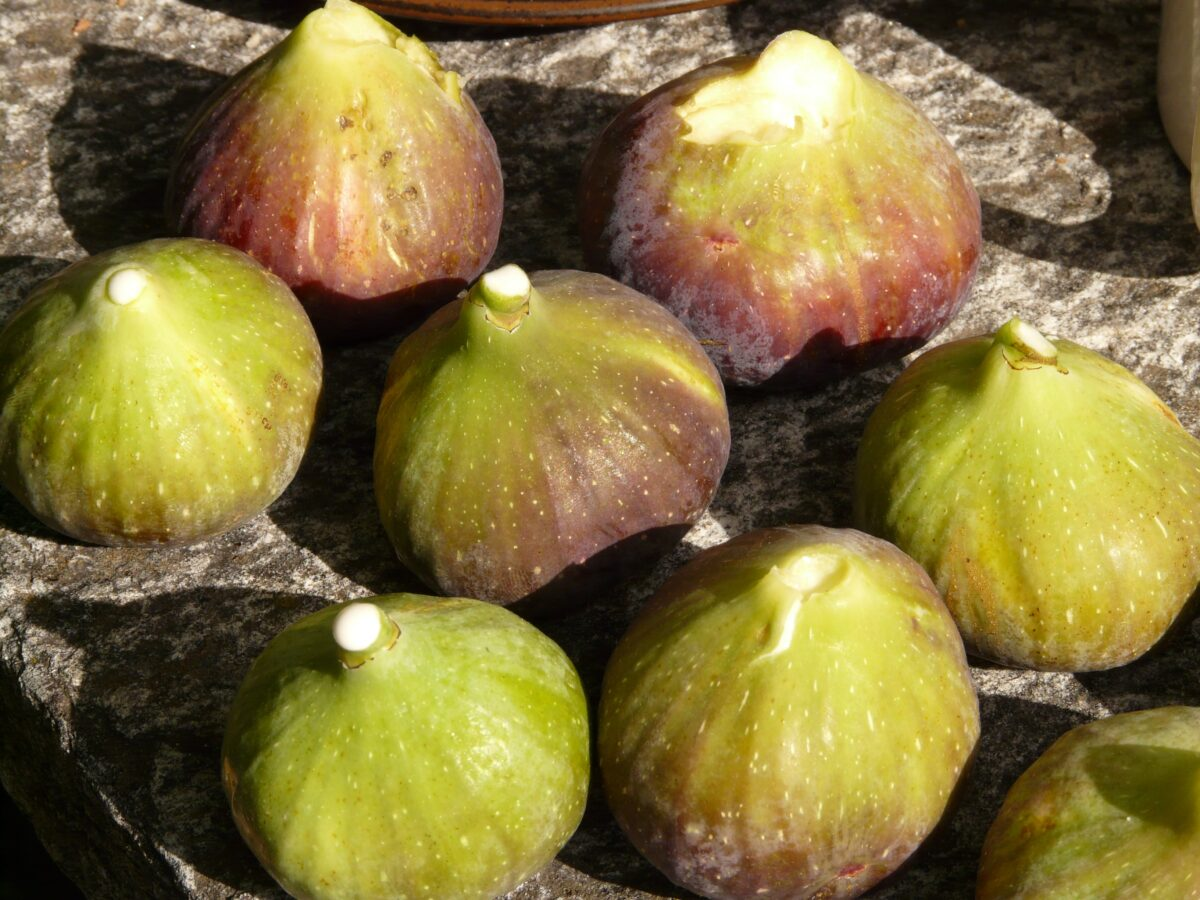 fig, figs, fruit