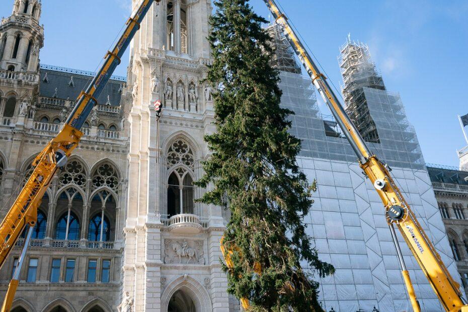 Božićno drvce kao simbol optimizma i zajedništva u Beču