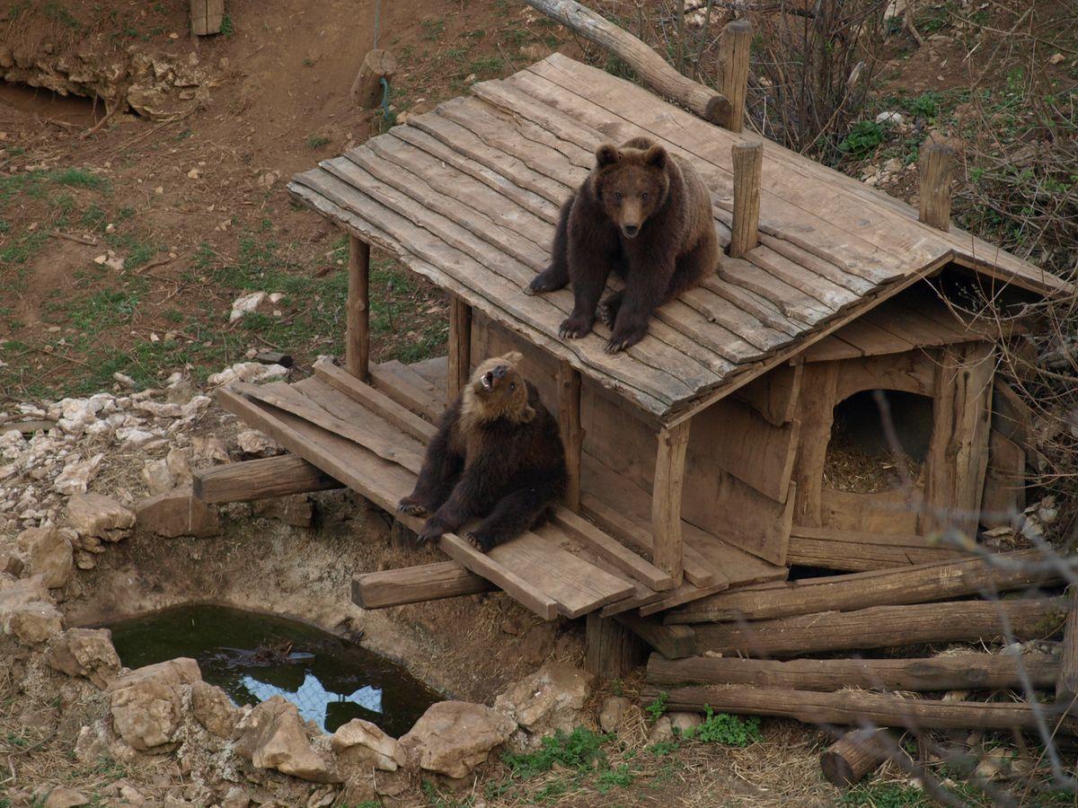 Medvjedi u Kuterevu reagirali na potres