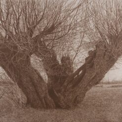 Nastajanje u nestajanju – izložba Dražena Eisenbeissera