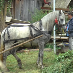 Seoski život u Transilvaniji u Rumunjskoj
