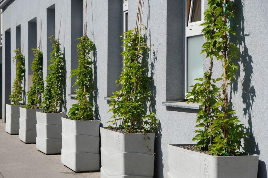 Beč subvencionira sustave za ozelenjivanje grada
