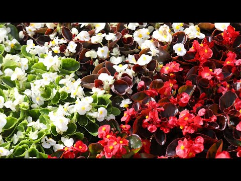 U Crikvenici 21. Festival cvijeća