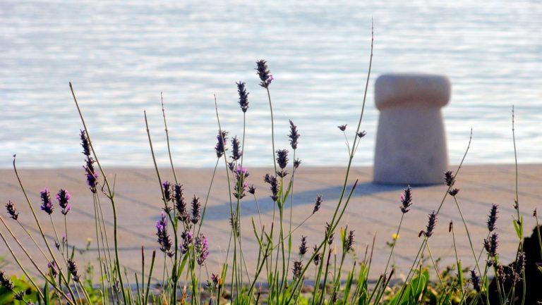 Prva samostalna izložba fotografija Dore Bosner: Miris ljeta