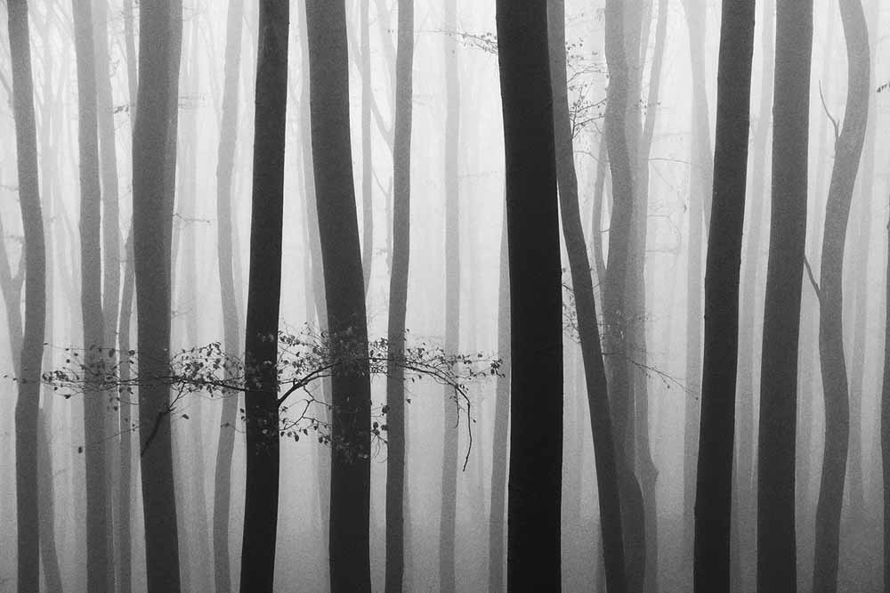 Mystical Forest I