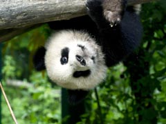 Baby boom u bečkom zoološkom vrtu